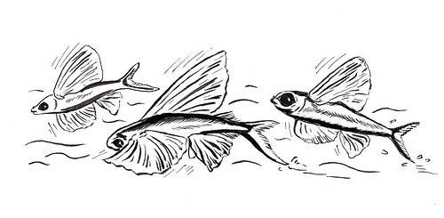 Flying Fish Drawing 3278699110_ecdd3468ab.jpg