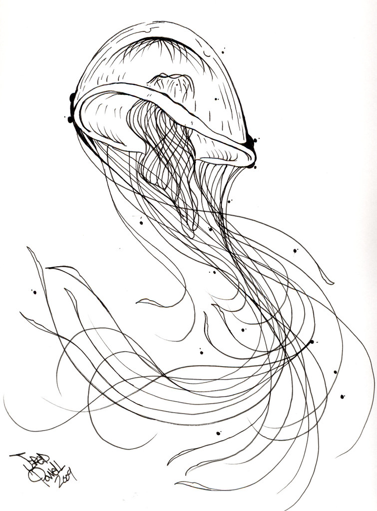 Gallery For gt Box Jellyfish Sketch