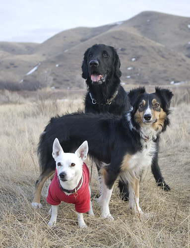 Furever Freed Dog Rescue Langley Reviews
