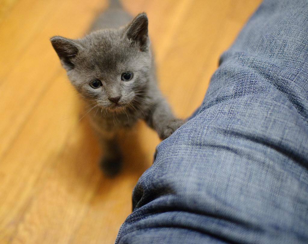 solid gray cat names