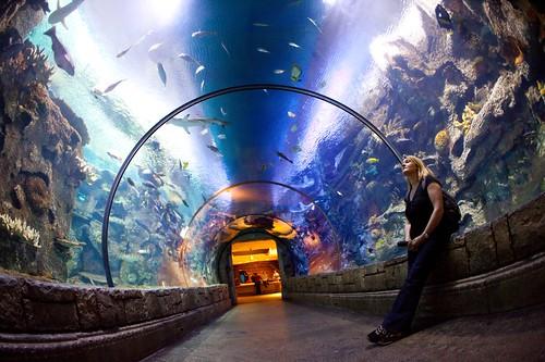 Image Result For Mandalay Bay Aquarium