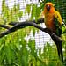 Taman Burung Kuala Lumpur - Bird