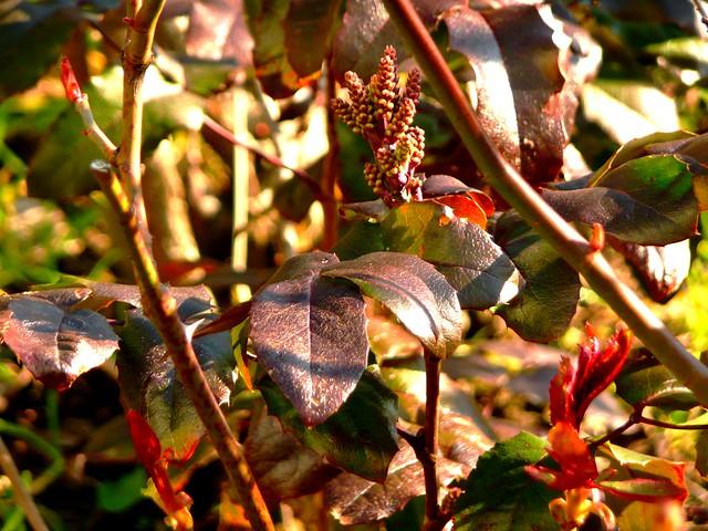 Feuilles et fleurs en hiver flickr photo sharing - Fleurs en hiver ...