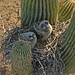 Owls in Nest