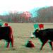 3D-04-10-09-0001a new baby calves