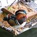 suzhou duck