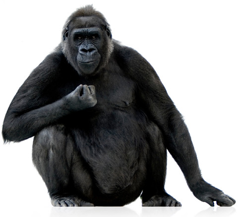 800-lb gorilla | by Search Engine People Blog