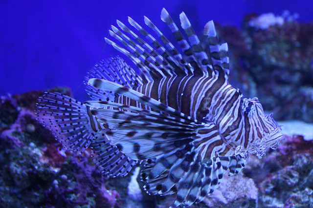 cool fish taken at the denver aquarium january 2009 rob annis