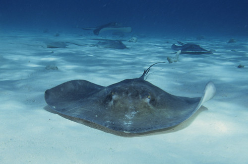Stingray CIty - 1992 | by petersbar