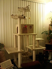 Best! Cat Tree! Evar! | by Oaktown Pirate