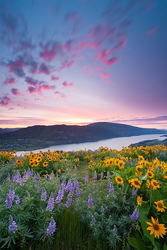 Rowena Sunrise 2 | by Jesse Estes