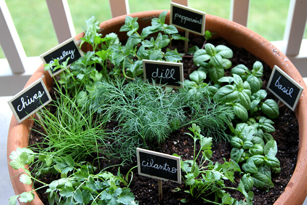 how to grow a herb garden doityourself mason jar container, Natural flower
