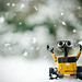 Wall-E, it's snowing!!