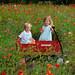 Knoxville_Garvey_Photography_Wildflower_Garden_Spring_020
