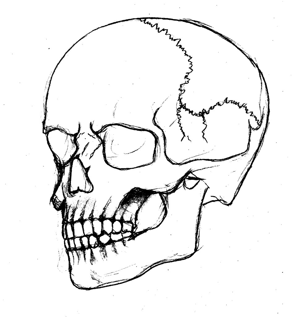 skull outline | Tumblr |Skull Outline Drawings