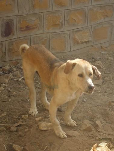 Maggot wound dog Jaisa...