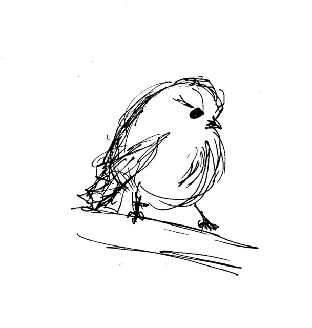 Baby Bird Sketch | Quick Sketch With Micron Pen | Christinepdx | Flickr