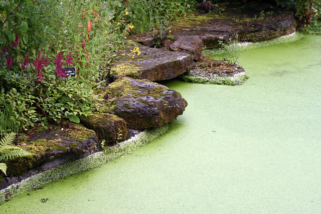 Stone garden pond edging with duck weed this garden for Pond stones landscaping