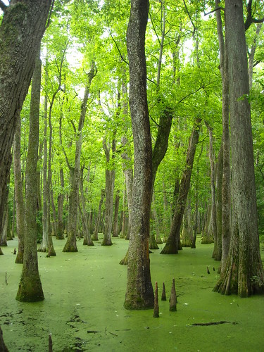 Green swamp | by /\ \/\/ /"|375|500|?|9df88c2d263440786427898bcc7f12ef|False|UNLIKELY|0.309323787689209