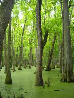 Green swamp | by /\ \/\/ /"|240|320|?|6c6c298e8195ae8b1bbb5d4e17151112|False|UNLIKELY|0.30742982029914856