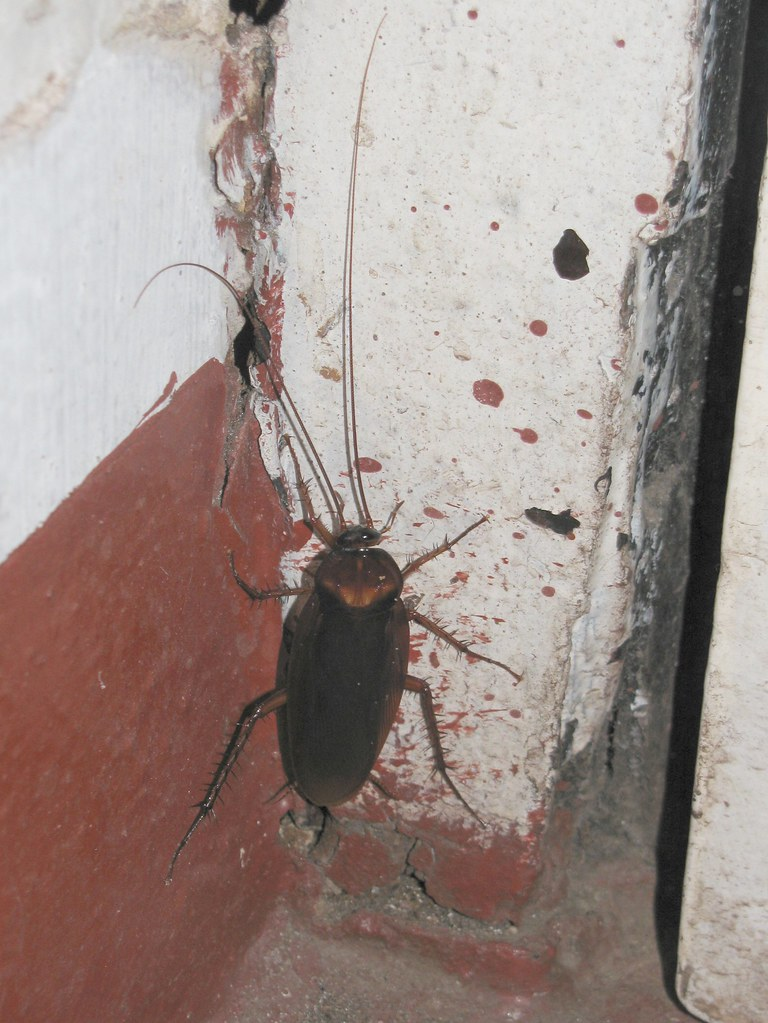 Cockroach In Room Can T Find It