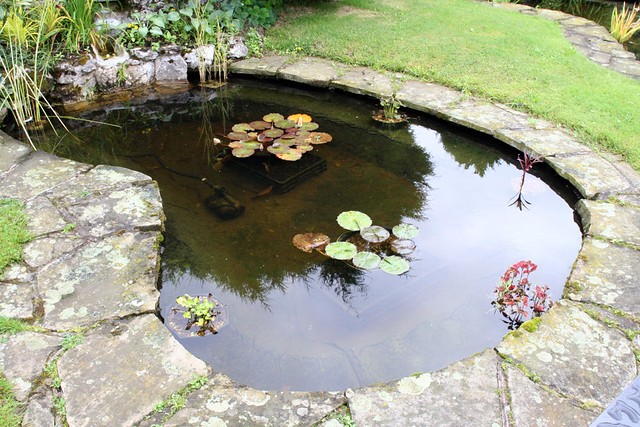 Kidney shaped garden pond with lilies this garden image for Garden pond making