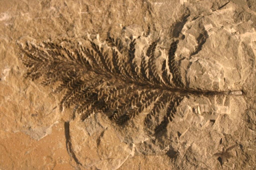 Plante Fossile Parcs Qu 233 Bec Flickr