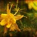 my golden grunge flower