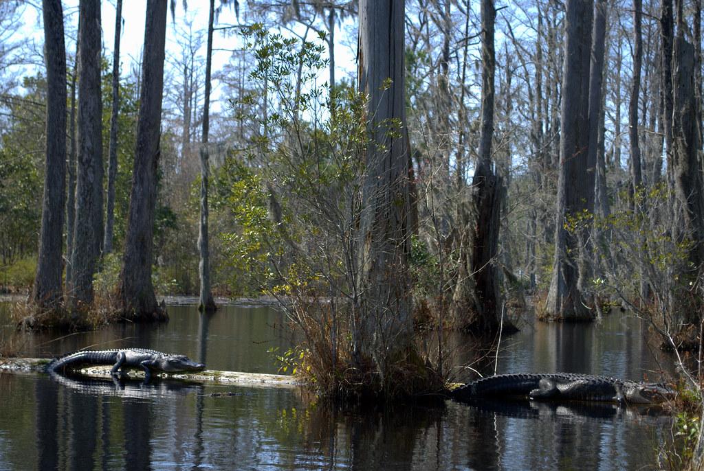 Escorts in goose creek south carolina