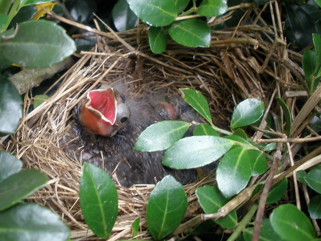 Baby Birds Are Doing Well
