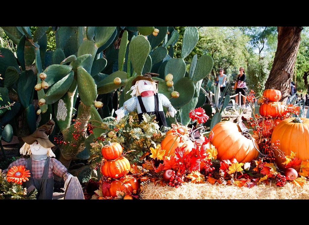 American Farm Life Ethel M Botanical Cactus Garden Henders Flickr