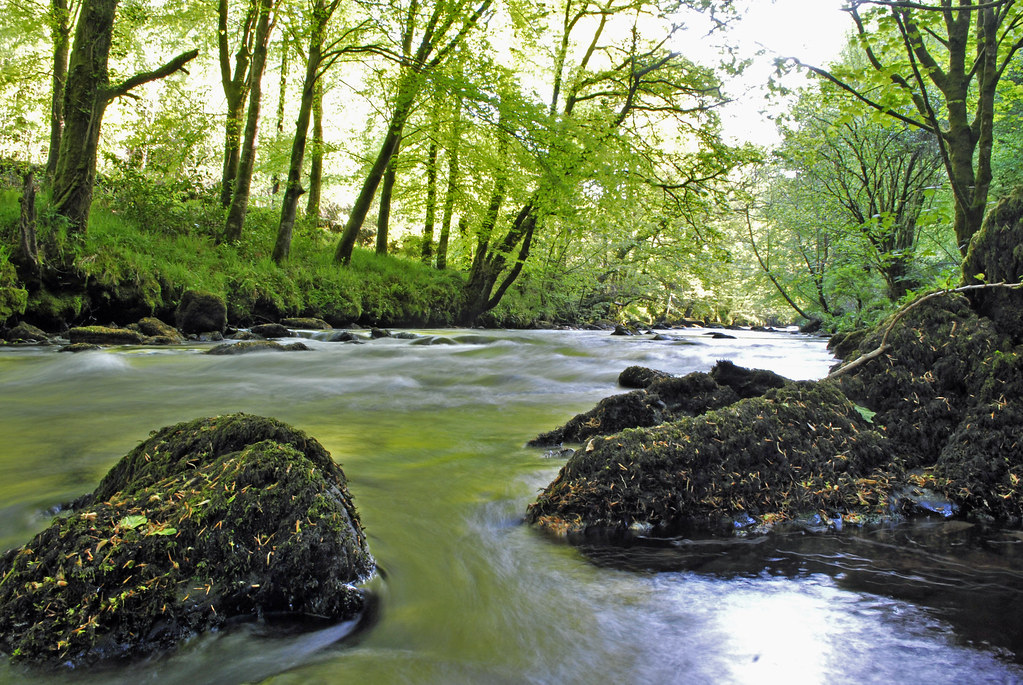 colligan river | Location: Colligan Wood is about 8km ...  River