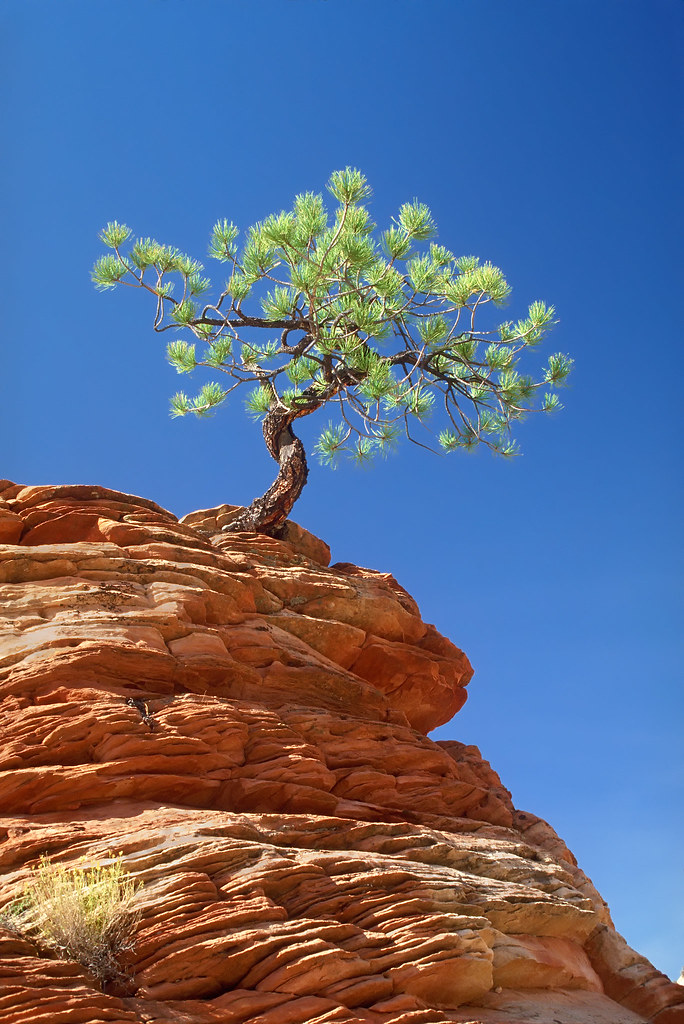 Overcoming Adversity Tree Clinging To Rocky Ledge Flickr