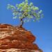 Overcoming Adversity - Tree Clinging To Rocky Ledge