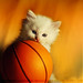 Do You Want To Play Basketball !!
