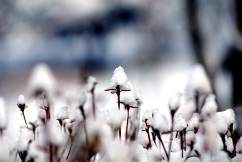 Snow | by floridapfe