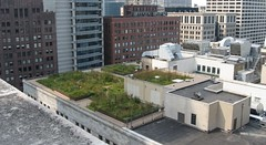 City of Chicago green roof | by Center for Neighborhood Technology