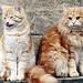 cat+cat