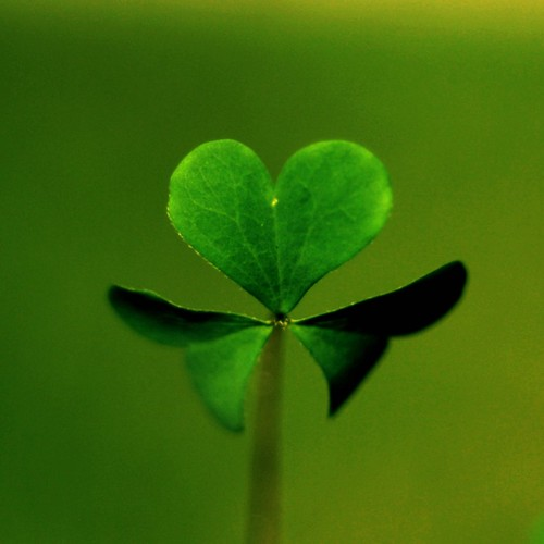 Heart shaped clover | by MarianneLoMonaco