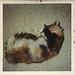 nov 1970 calico catnap