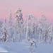 after_sunset___1st_of_january_kuusamo