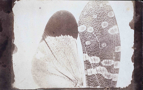Photomicrograph of insect wings | by National Media Museum