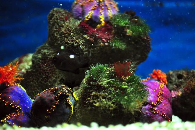 Underwater World Langkawi : Underwater World - Langkawi Flickr - Photo Sharing!