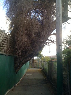 A large tree limb growing through a large fence.