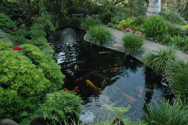 Koi pond and path meditation garden self realization for Koi pool water gardens thornton