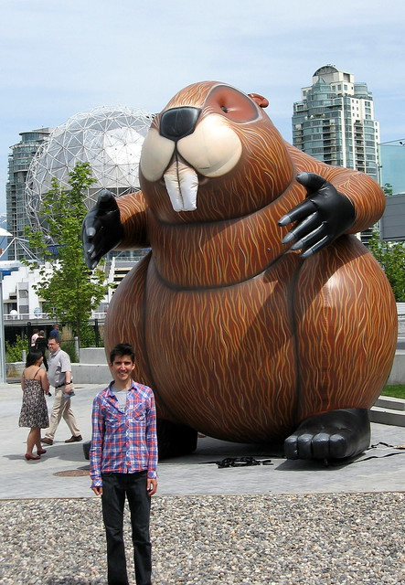 Man Eating Beaver