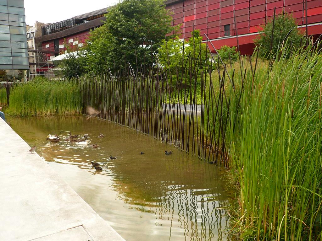 Les canards et les oiseaux la ville jardin du mus e du for Jardin quai branly