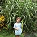 when we grew corn ...