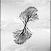 Tree Merge