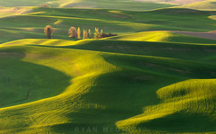 Palouse Golden Light | by Ryan McGinty
